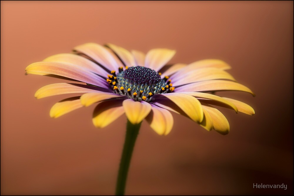 Mellow Yellow by Helenvandy