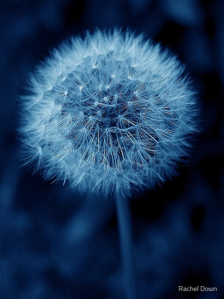 Blue Dandelion by Rachel Down