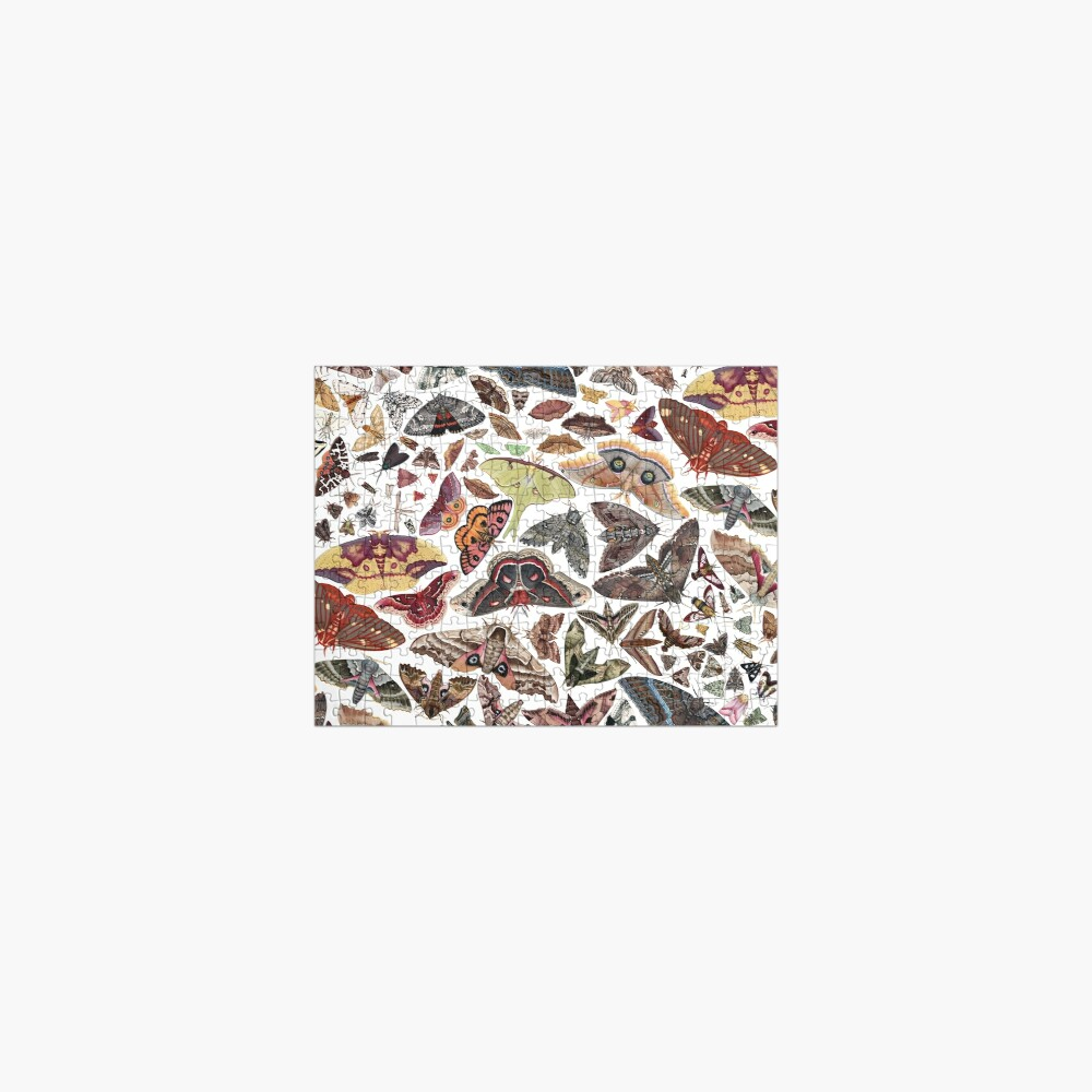 Moths of North America Pattern Jigsaw Puzzle
