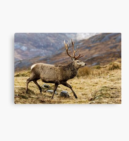 Red Deer Stag Running Canvas Print