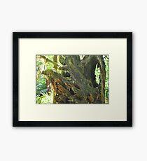 Tree Mystery Framed Print