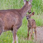 Curious Baby......Protective Mother by TeresaB