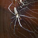 golden orb... by stickelsimages