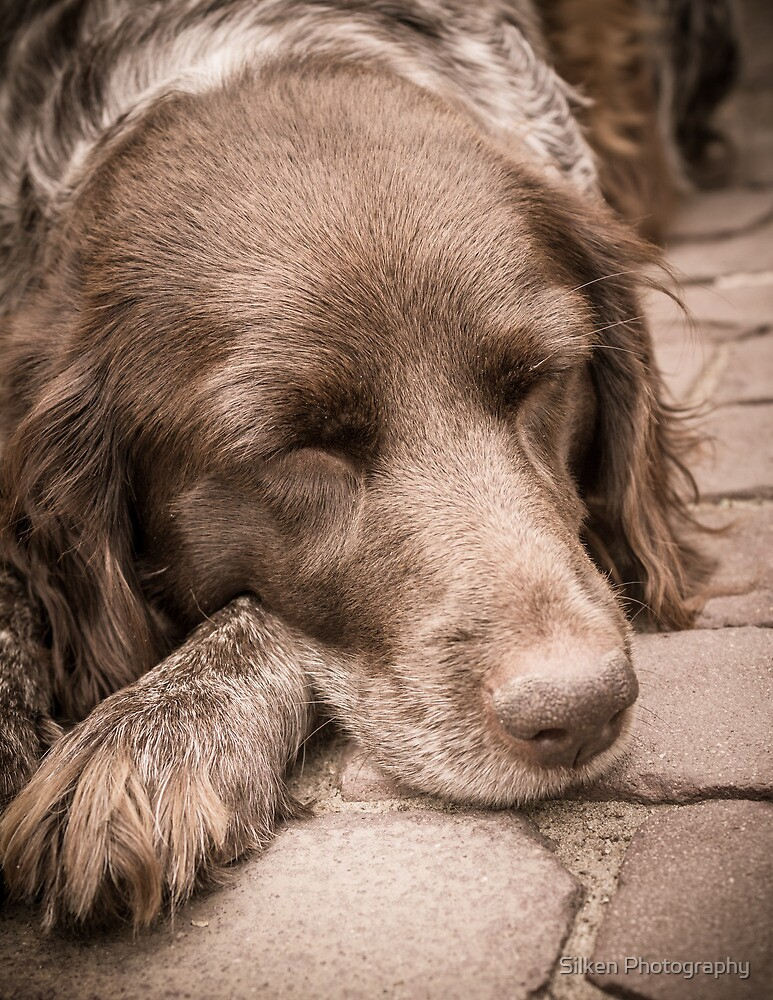 Shishka-Dog Sleeps by Silken Photography