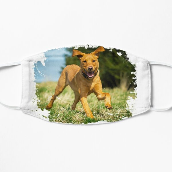 Red Fox Labrador Retriever puppy Mask
