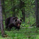 Brown Bear by Remo Savisaar