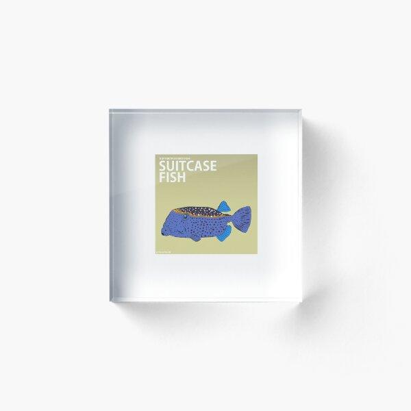A friendly looking Boxfish (Literal Danish) - Suitcase Fish Acrylic Block