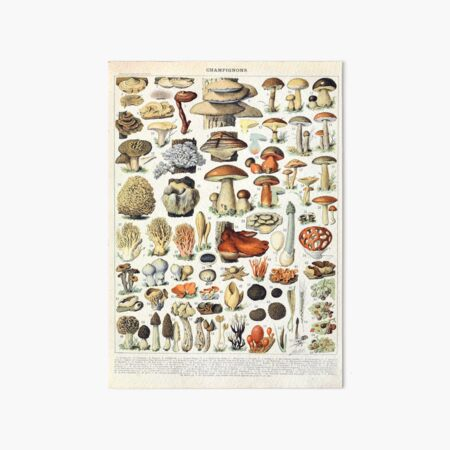 Adolphe Millot - Champignons A - French vintage poster Art Board Print