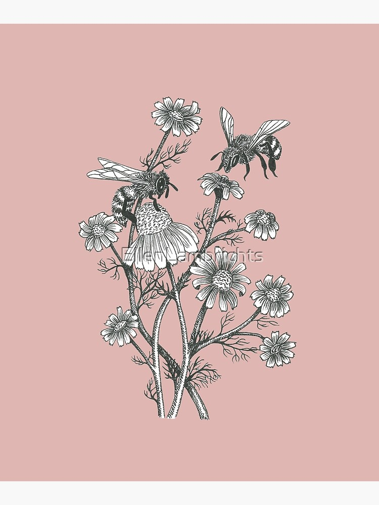 bees and chamomile on dusty pink background by EllenLambrichts