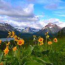Wildflowers Glacier National Park by Luann wilslef