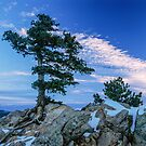 Above Boulder Colorado Spirit Tree by Gregory J Summers