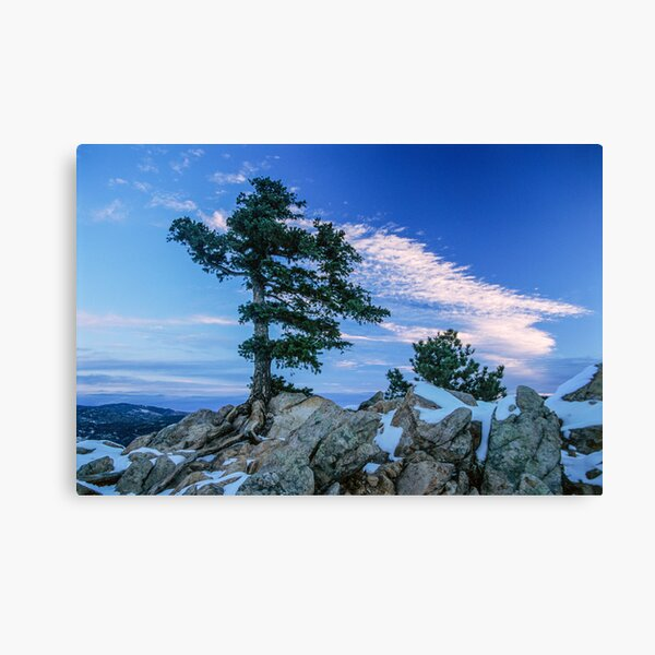 Above Boulder Colorado Spirit Tree Canvas Print