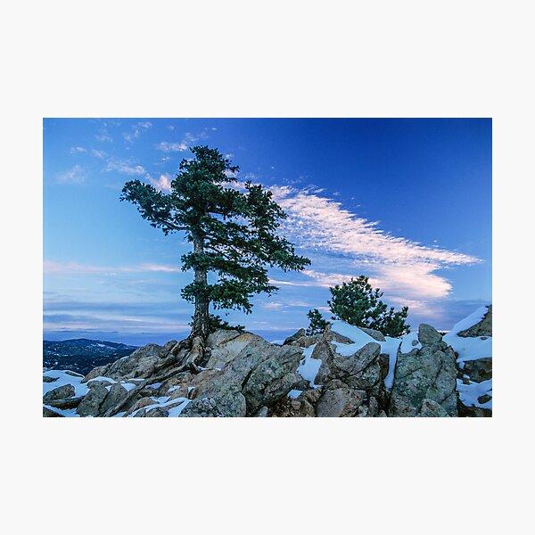 Above Boulder Colorado Spirit Tree Photographic Print