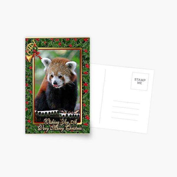 Red Panda Blank Christmas Greeting Card Postcard