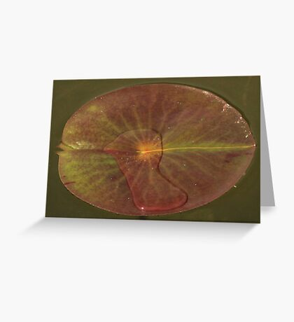 Lily Bird Water Currency Greeting Card