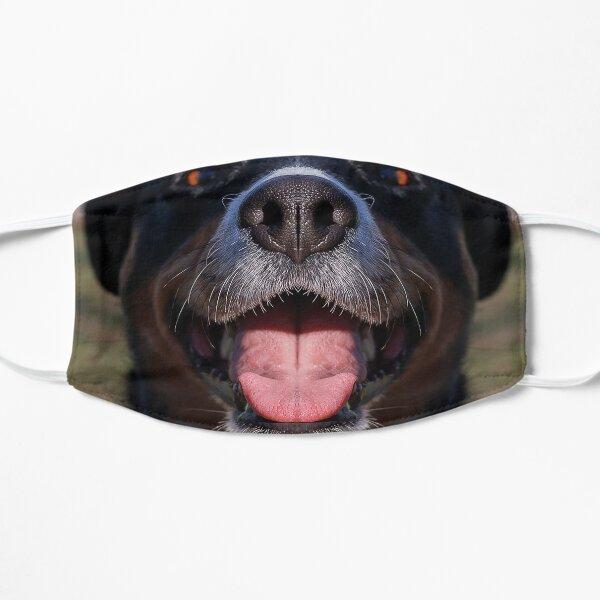 Appenzeller Mountain Dog show toungue Black Cute Pet licking Close up Mouth Flat Mask