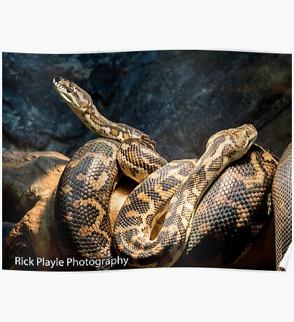 Snakes Alive Poster
