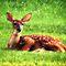 Wildlife- Bicolor Beauties