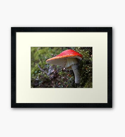 Scarlet Flycap Complete with Fly Framed Print