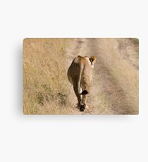 I am walking - lion Canvas Print