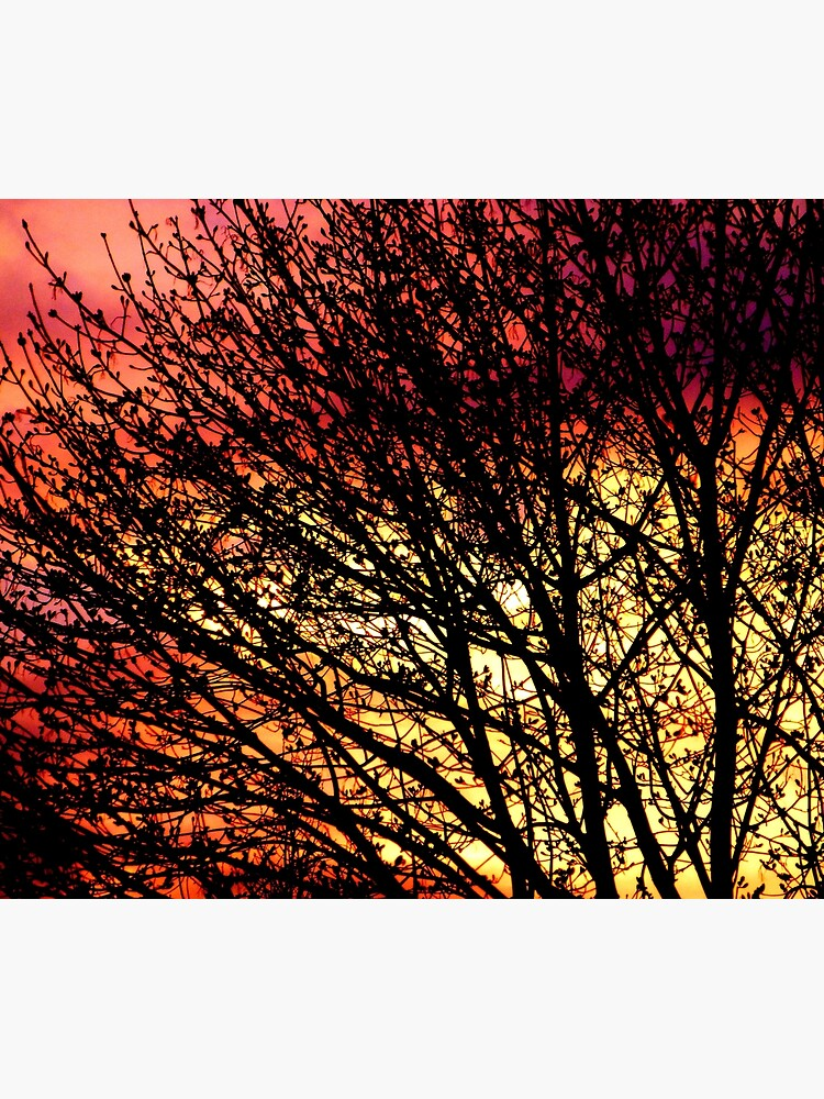 Evening Light in Rose and Gold by elaine226