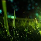 Feeling the Bugs Life by Andrea Bodnarik