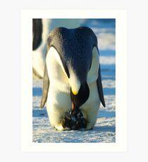 Hatching Emperor Penguin Art Print