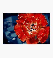 Scarlet Peony Flower Photographic Print