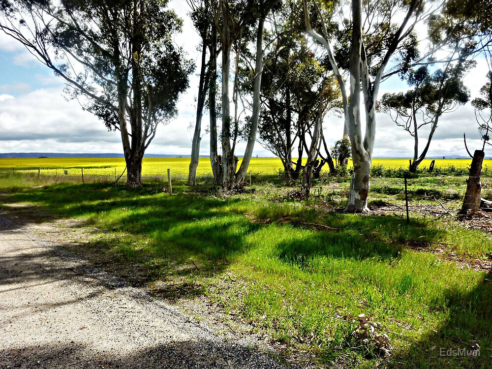 *Old Fence along Agars Rd. Balliang.Vic* by EdsMum