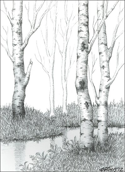 BIRCH TREE 02 by RainbowArt