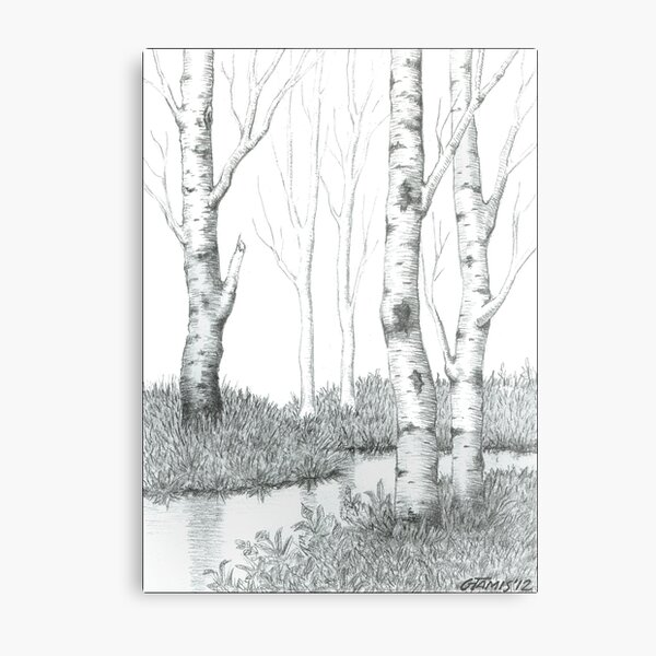 BIRCH TREE 02 Metal Print