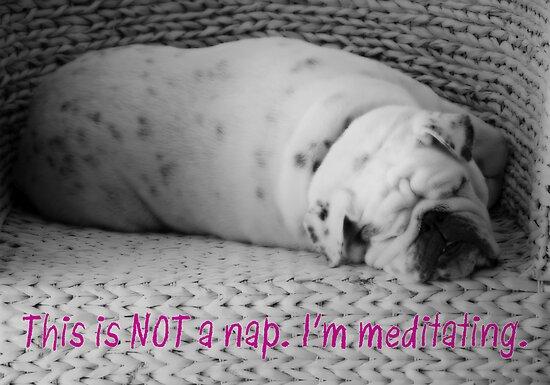 Not a Nap - I'm Meditating - Sleeping Bulldog - Black and White Dog by traciv