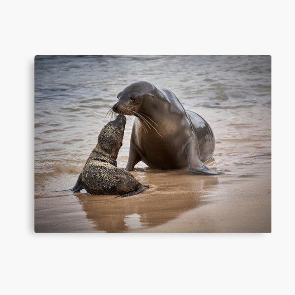 Sea Lion Pup Kisses Mother Metal Print