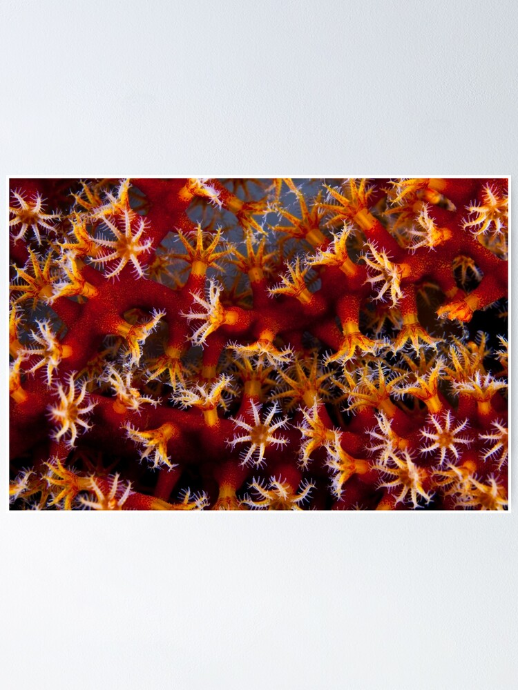 Alternate view of Animal flowers Poster