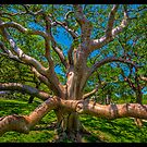 Tree Gone Wild by Edvin  Milkunic