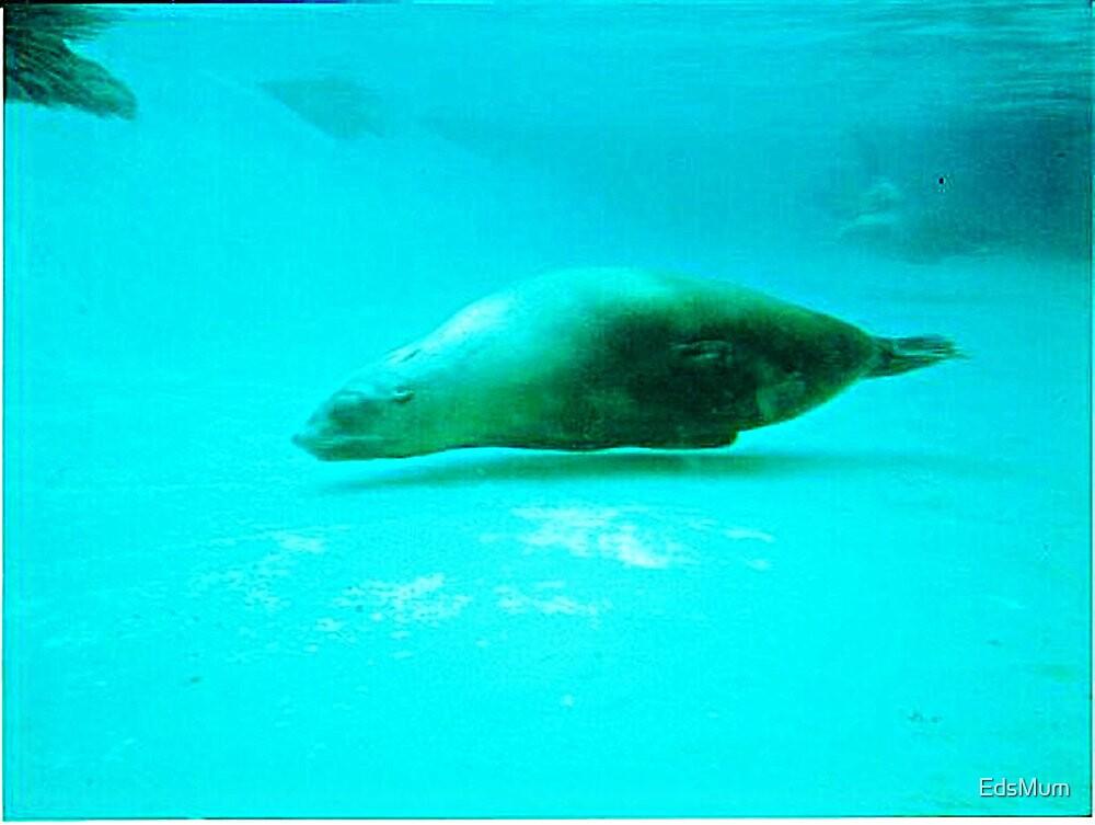 Seal -  Aquarium - Melbourne, Vic by EdsMum