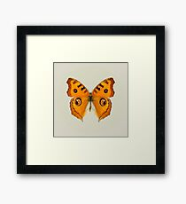 Meadow Argus Butterfly Framed Print