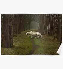 Sheep on the dike Poster