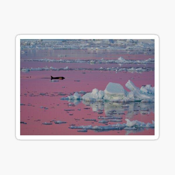 Orca Sunset Sticker
