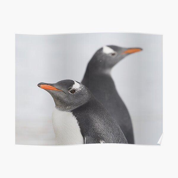 Penguin Pride  Poster