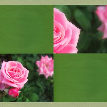 Pink Roses in Anzures 1 Blank Q5F0 by TravelPhotoArt