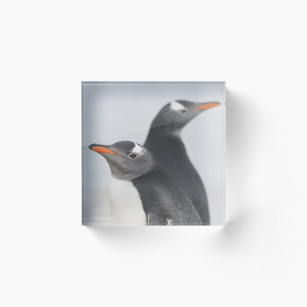 Penguin Pride  Acrylic Block