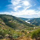 Vineyars in Douro Valley by homydesign