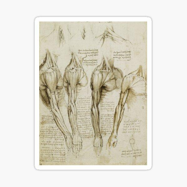 Anatomy Diagram - Arm Sticker