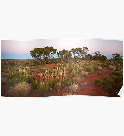 Spinifex on a Sandhill at Dawn Poster