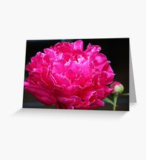 Pink Peony III Greeting Card