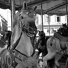 Horses in B&W by bertipictures