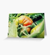 Garden Tomato Greeting Card