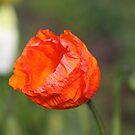 Crinkled Orange by GandK