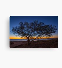 Whisper Tree Canvas Print